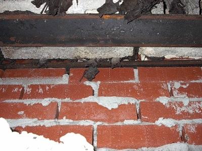 Bats Inside Walls