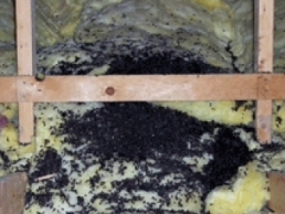 How To Identify Bat Guano Amp How To Remove It Critter Control
