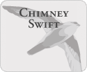 Chimey Swift Noises