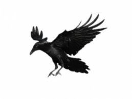 Image of Crows