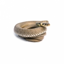 image of Snake Photos