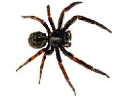 Image of Spiders