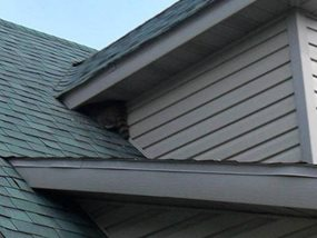 image of racoon entering dormer