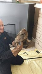 houston owl rescued from a fireplace