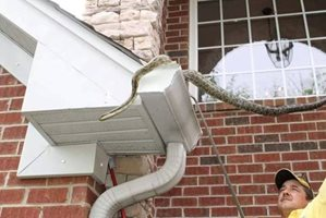 capturing a snake in a gutter
