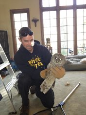 owl rescued from a columbus fireplace